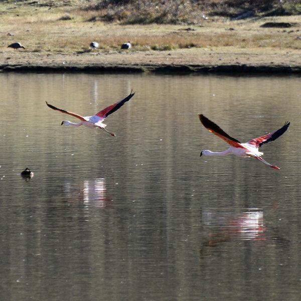 Flamingos in Patagonia National Park.